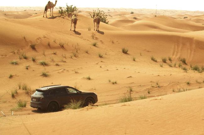 Le nouveau Porsche Cayenne en approche