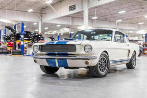 Bonahms : Shelby GT350H ex-Shelby